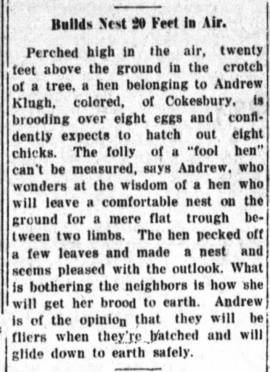 Andrew Klugh's hen 29 Jul 1923